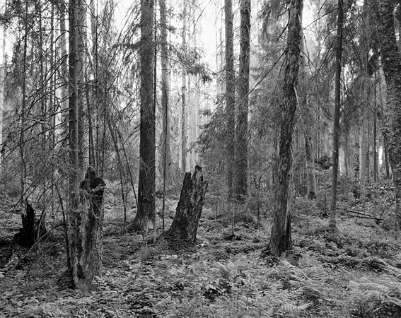 Forêt primaire de Berezinsky, 24 mai 2014 © Thierry Girard