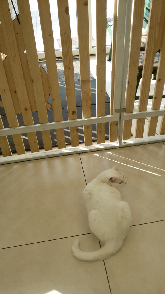 chat blanc au musée du chat minsk