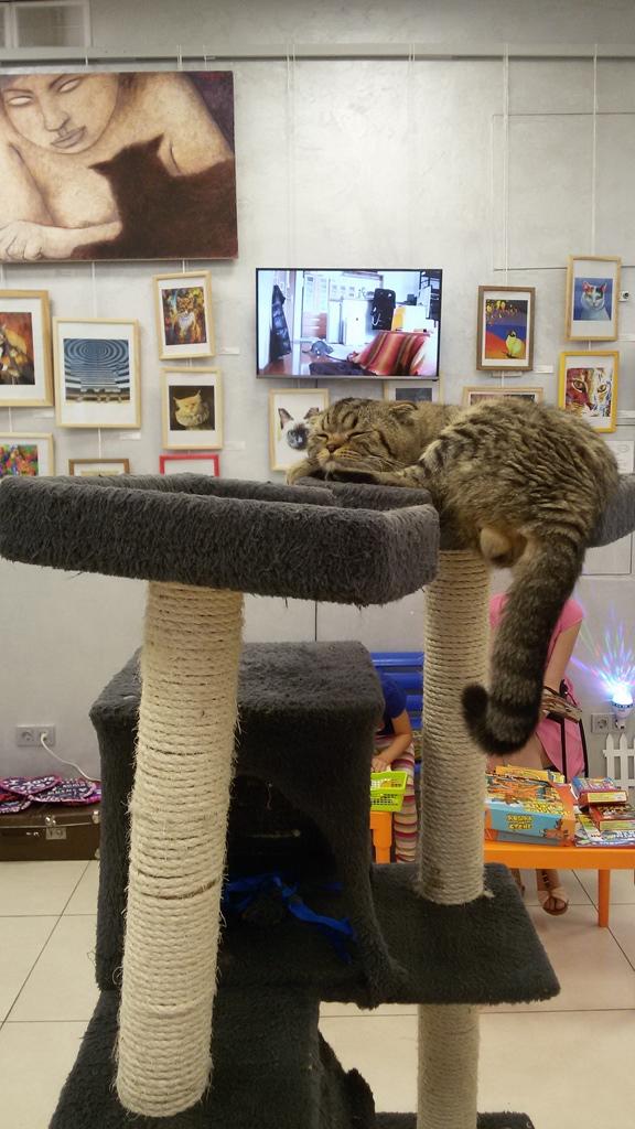 chat directeur au musée du chat à minsk