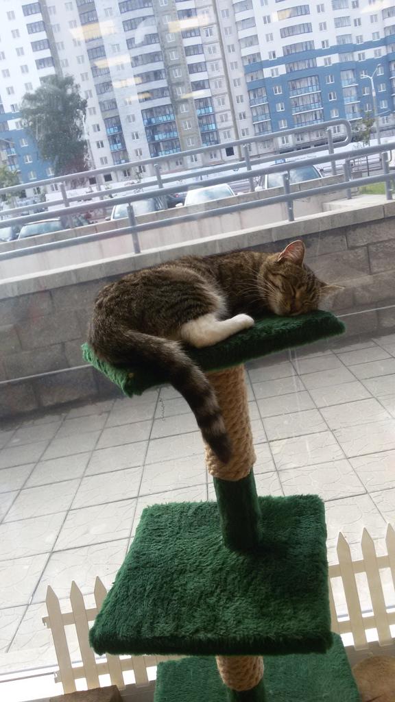 chat qui dort au musée du chat minsk