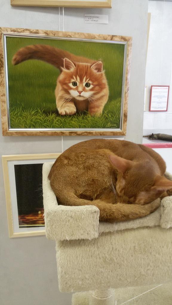 toucher le chat musée du chat minsk