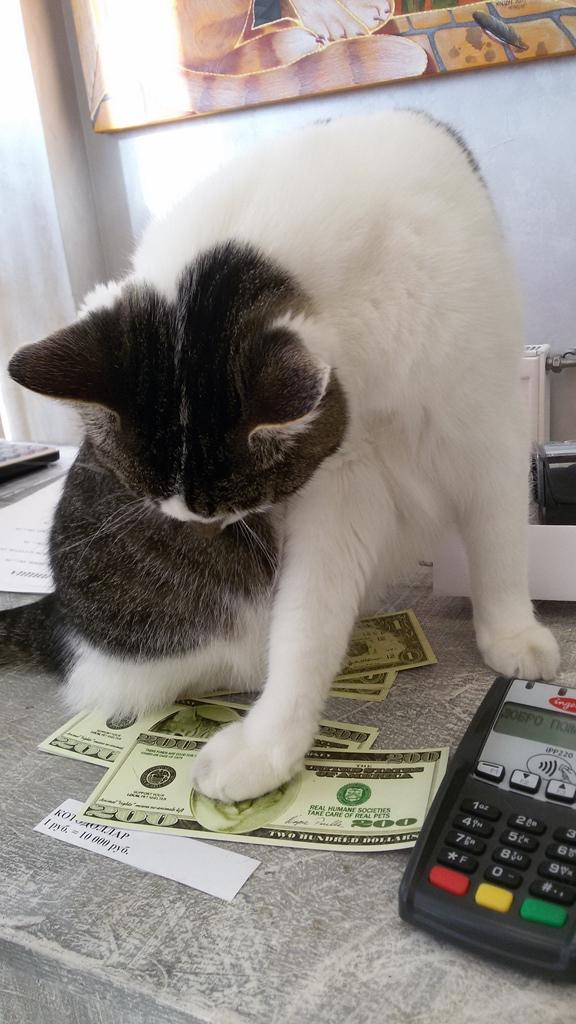 chat sur les dollars