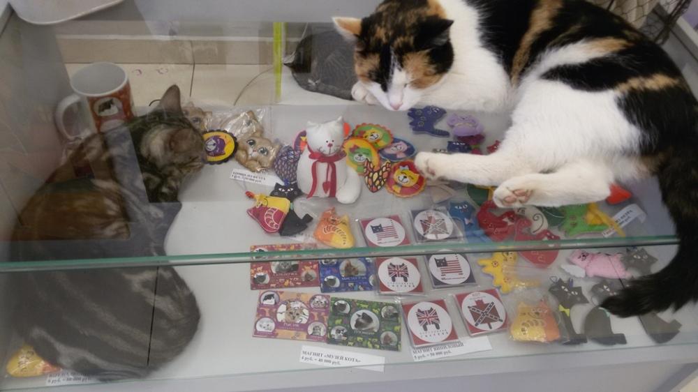 chats et souvenirs au musée du chat