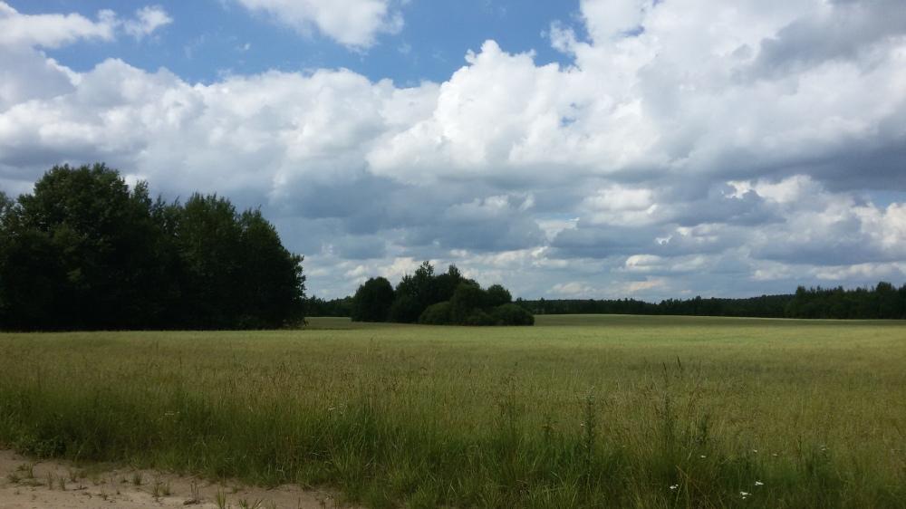 Beaux paysages biélorusses ruraux en été