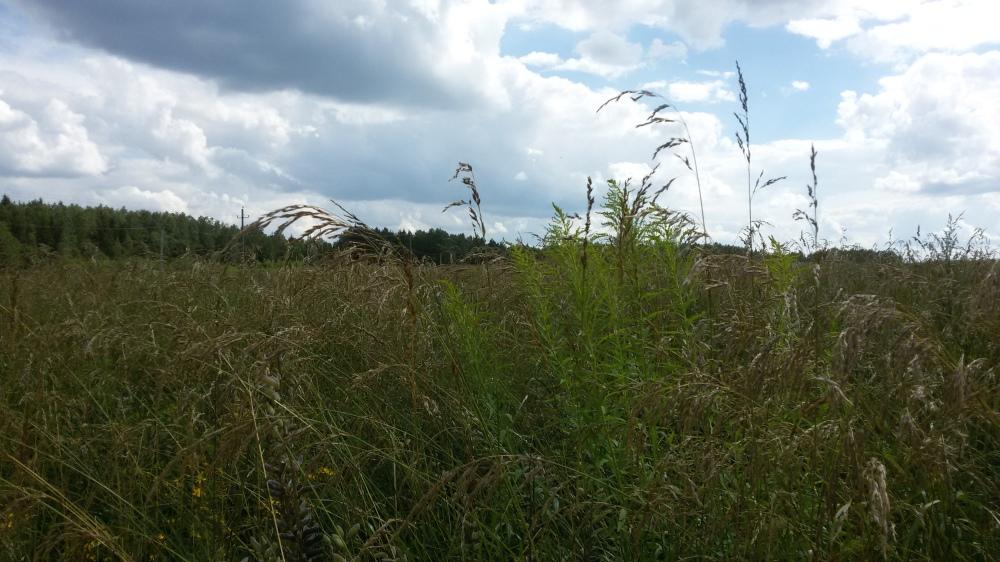 Plantes biélorusses