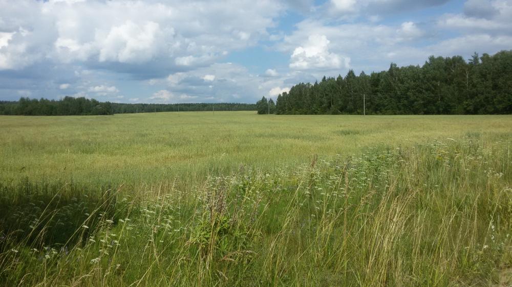 Paysages biélorusses d'été lin