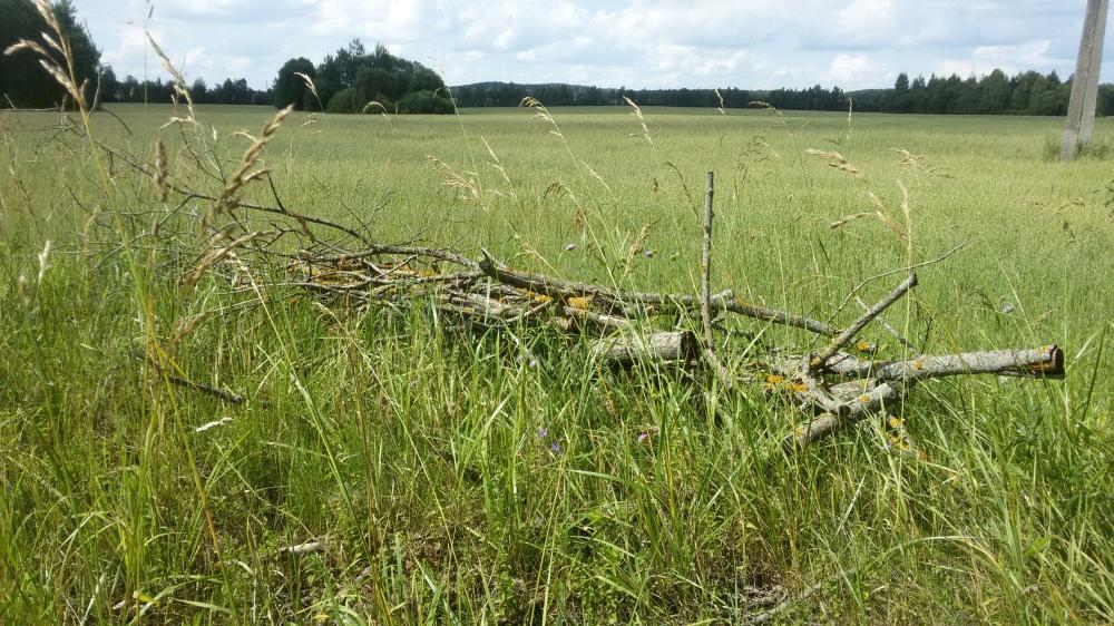 Paysages biélorusses ruraux en photo