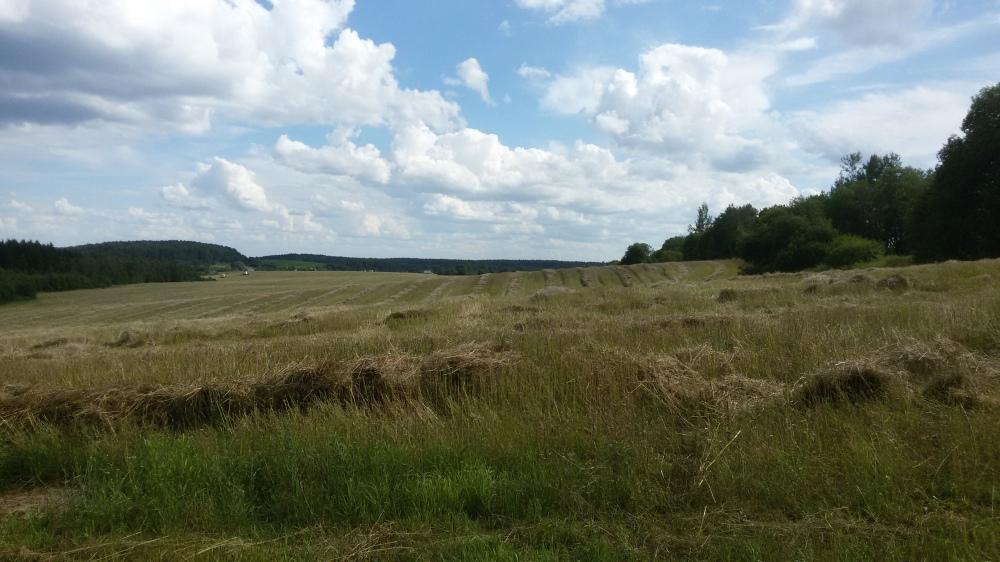 Nature biélorusse en été
